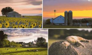 Day on The Farm Windows 10 Theme