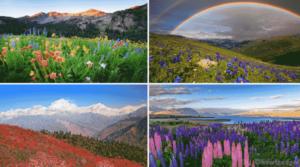 Wildflowers PREMIUM Windows 10 Theme