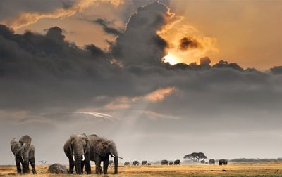 Fifty Rare Collection of Windows 10 Themes - An African Safari