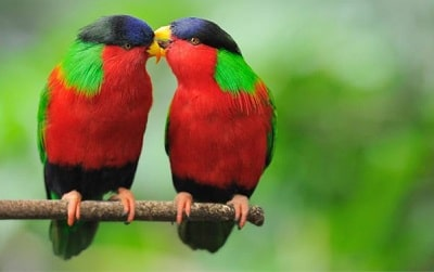 Fifty Rare Collection of Windows 10 Themes - Colorful Birds