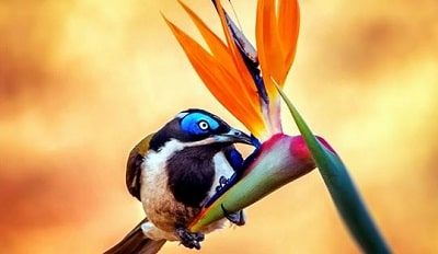 Fifty Rare Collection of Windows 10 Themes - Rainbow of Birds