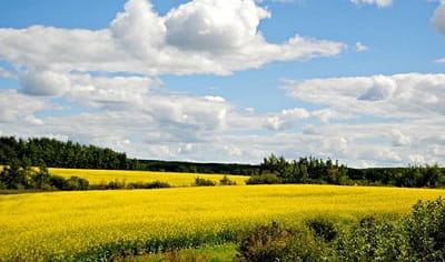 Rare Collection of Windows 10 Themes - Exploring Manitoba