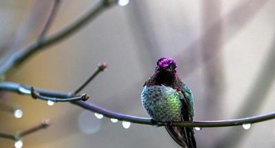 PNW Birds